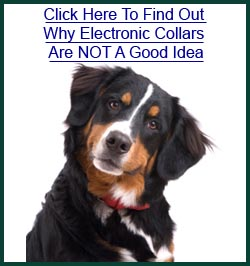 Remote collar dog training